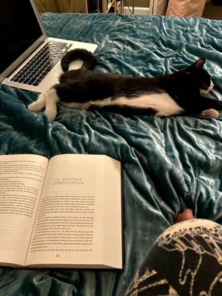 """A small black and white cat sprawls out on a teal velvet bedspread. In the foreground, there's a copy of Twilight opened to chapter 13, """"Another Complication."""""""
